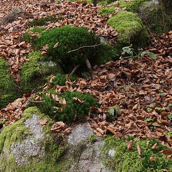 Naturopathie - La nature au service de la santé.