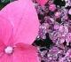 séance découverte de naturopathie, fleurs de bach et sonothérapie